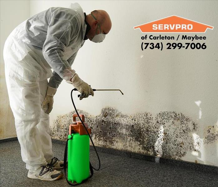 Mold Remediation Mold in Your Home or Rental Property